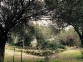 Le rovine di un'abitazione di epoca medievale all'interno del Parco Archeologico Naturalistico.