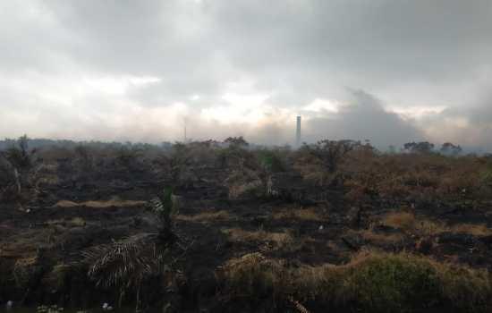 Kepala BPBD Aceh Barat: Alhamdulillah Api KARHUTLA sudah padam