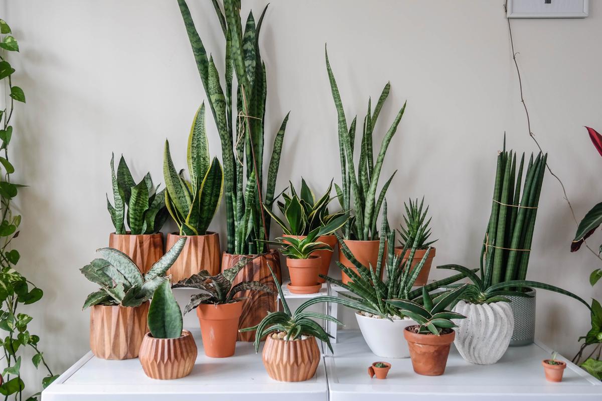 luchtzuiverende kamerplanten  Flow Magazine NL