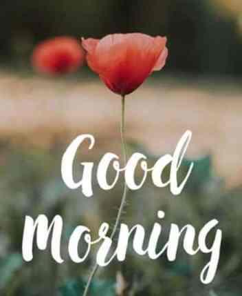 Good Morning Full Screen Whatsapp Video Status