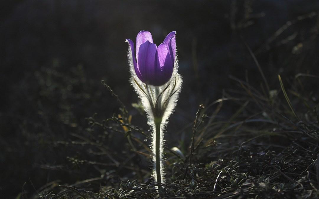 TIENDA ESOTERICA ONLINE: Aprovechar la energía de la primavera