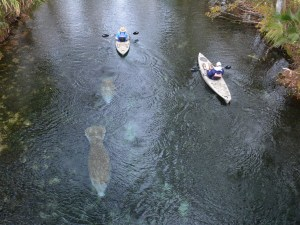 Kayakers at Silver Springs, Florida