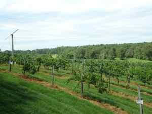 Burnley Vineyards Property