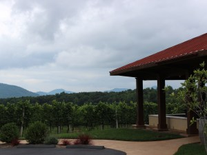 A view of the vineyard from the pavilion.