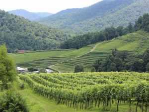 Delfosse Vineyards Mountain View