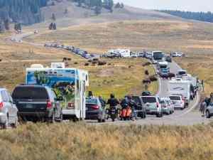 Bison jam in Hayden Valley, Yellowstone