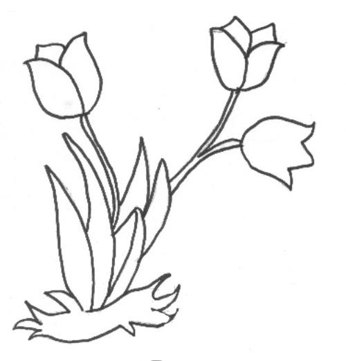 Blumen Vorlage Tulpe