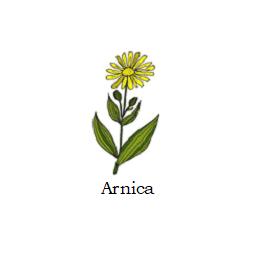 herb arnica