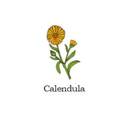 herb calendula