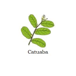 herb catuaba