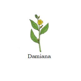 herb damiana