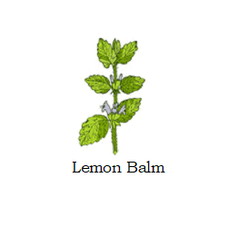 herb lemon balm
