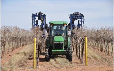 Mechanical Pre-pruning in the Vineyard