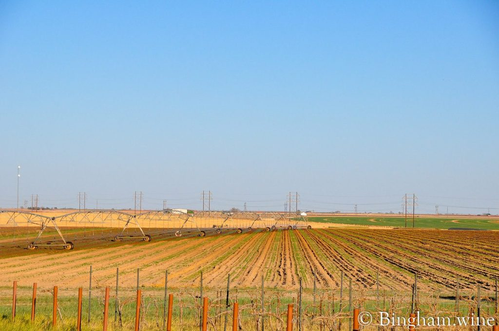 rows of newly planted vineyard at Bingham Family Vineyards