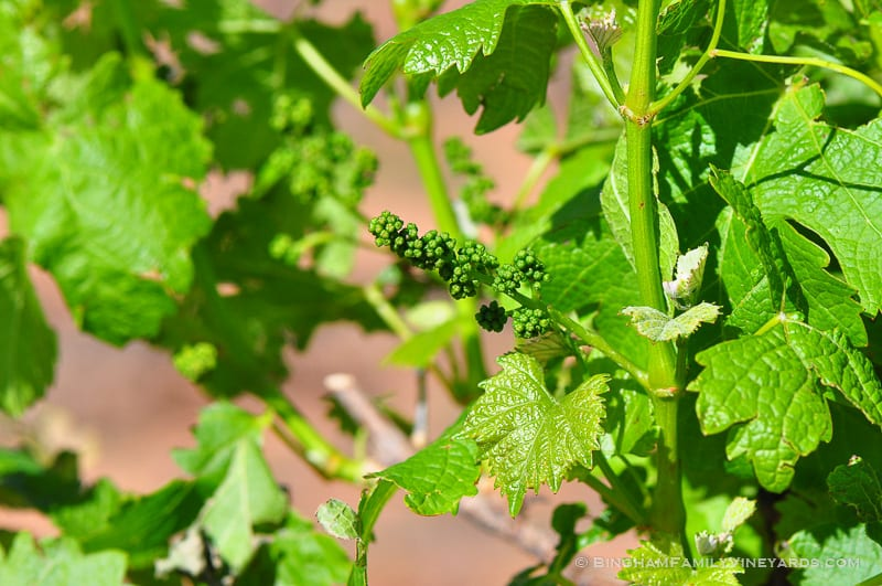 15.04.29_vineyards_020-web