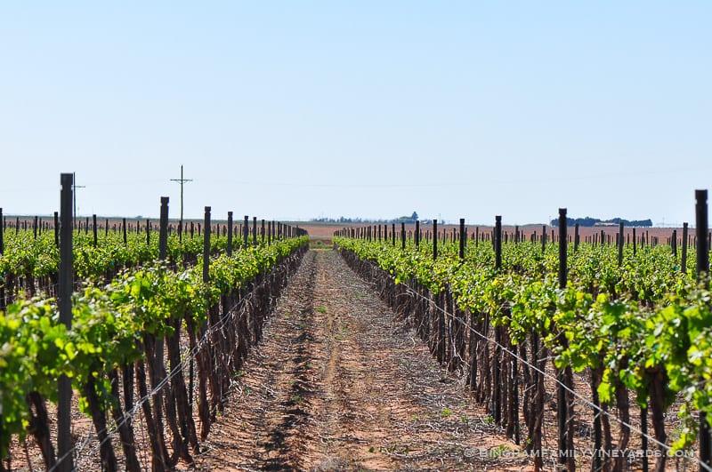 15.04.29_vineyards_033-web