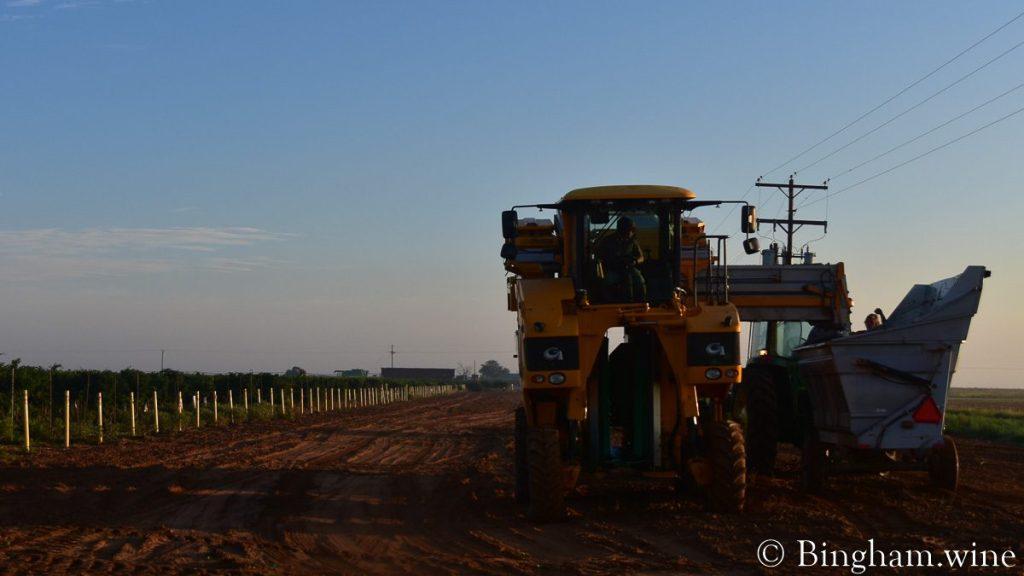 Grapeharvest harvesting at Bingham Family Vineyards