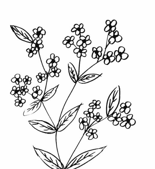 Contoh Gambar Bunga Simple