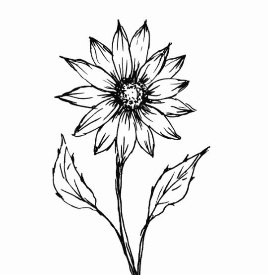25 Gambar Sketsa Sederhana Hewan Bunga Rumah Dan