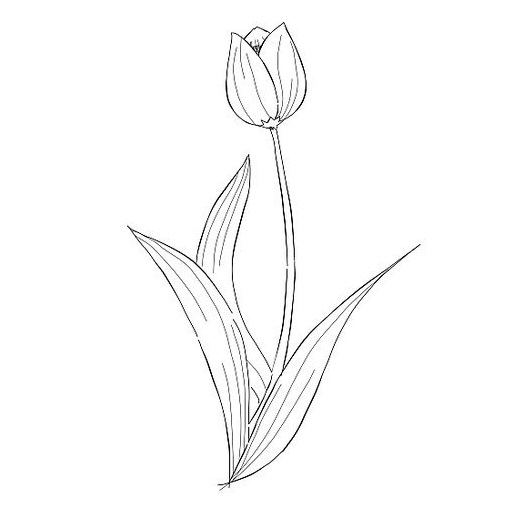 Mirzan Blog S 30 Ide Keren Gambar Kartun Bunga Tulip Hitam Putih