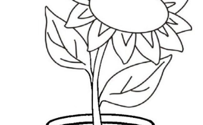 Paling Keren 20 Gambar Sketsa Bunga Dalam Pot Koleksi Bunga Hd Cute766