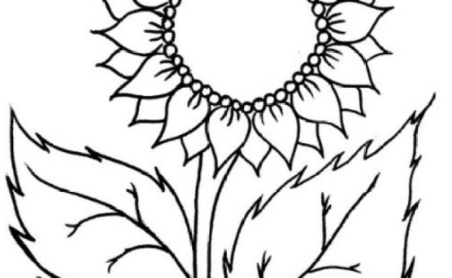 93 Gambar Bunga Matahari Kartun Hitam Putih Cikimm Com