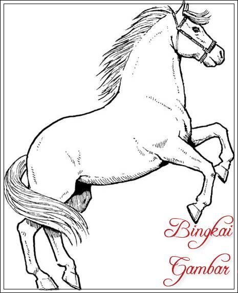 15+ Contoh Gambar Sketsa Kuda Unik Dan Lucu