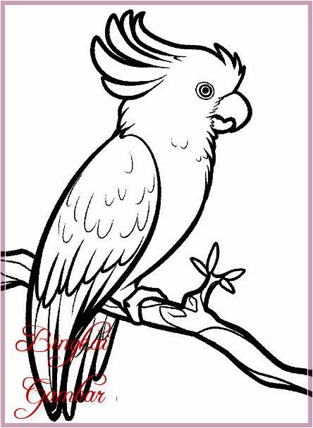Contoh Gambar Burung : contoh, gambar, burung, Gambar, Sketsa, Burung, Paling, Mudah, Bagus, Bingkaigambar.com