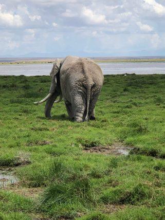 Amboseli (58)