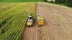 Devlet destek verdi, Bingöl'de silajlık mısır üretimi 14 bin tondan 80 bin tona ulaştı