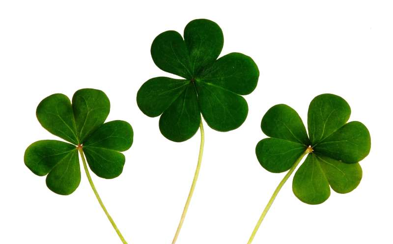 Lucky Clover leaves!