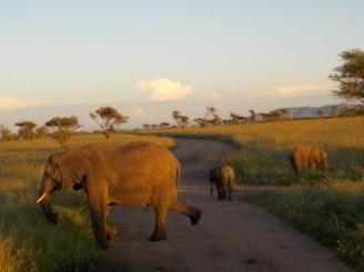Sonnenaufgang im Serengeti