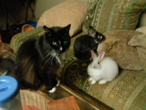 can cats and bunnies live together | BinkyBunny