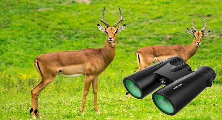 Best Binoculars for Elk and Deer Hunting