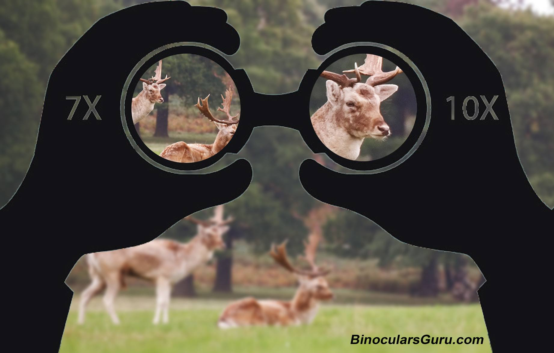 magnification of binoculars