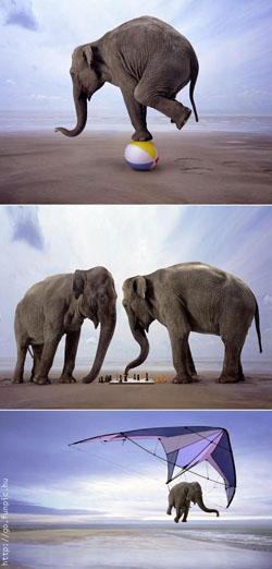 Bakat vs sesuatu yg bisa dipelajari