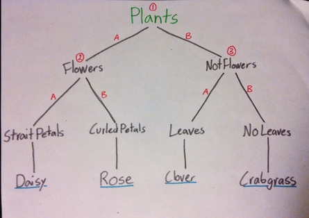 DICHOTOMOUS DIAGRAM  pages: