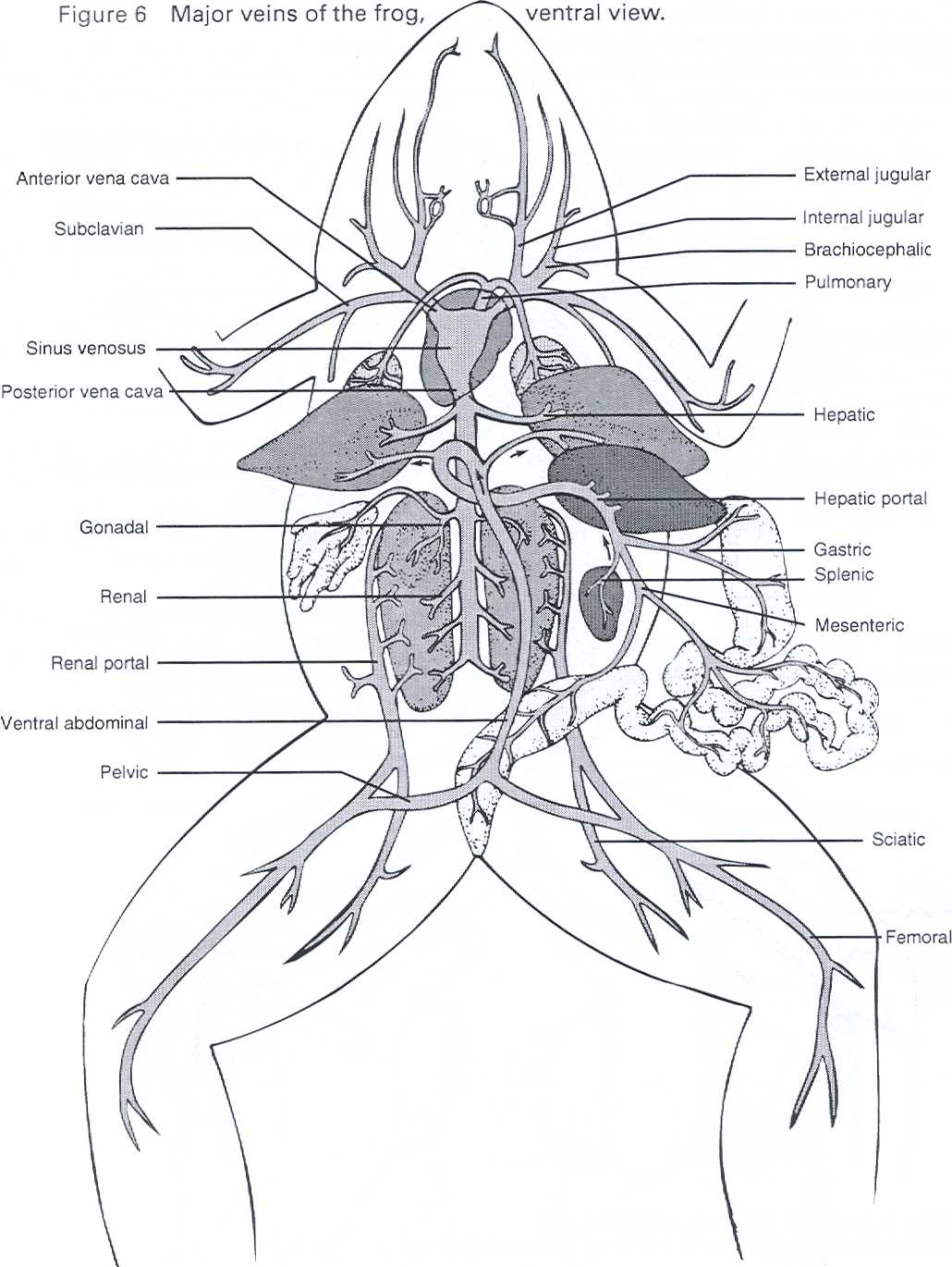 frog internal anatomy diagram labeled wiring for blower motor resistor dissection of the