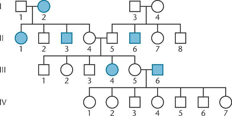 Chapter 3 Mendelian Genetics