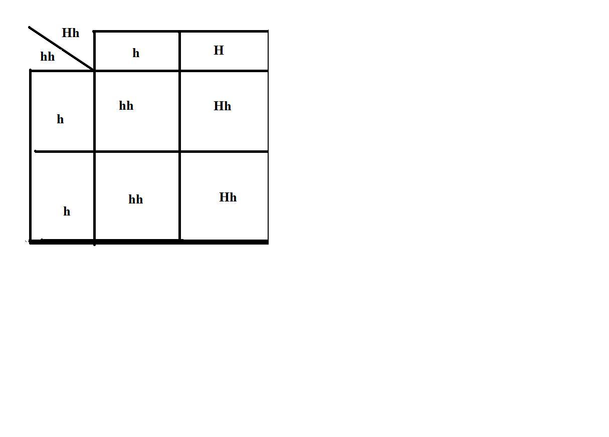 Color Blindness Punnett Square Color Blindness X Linked
