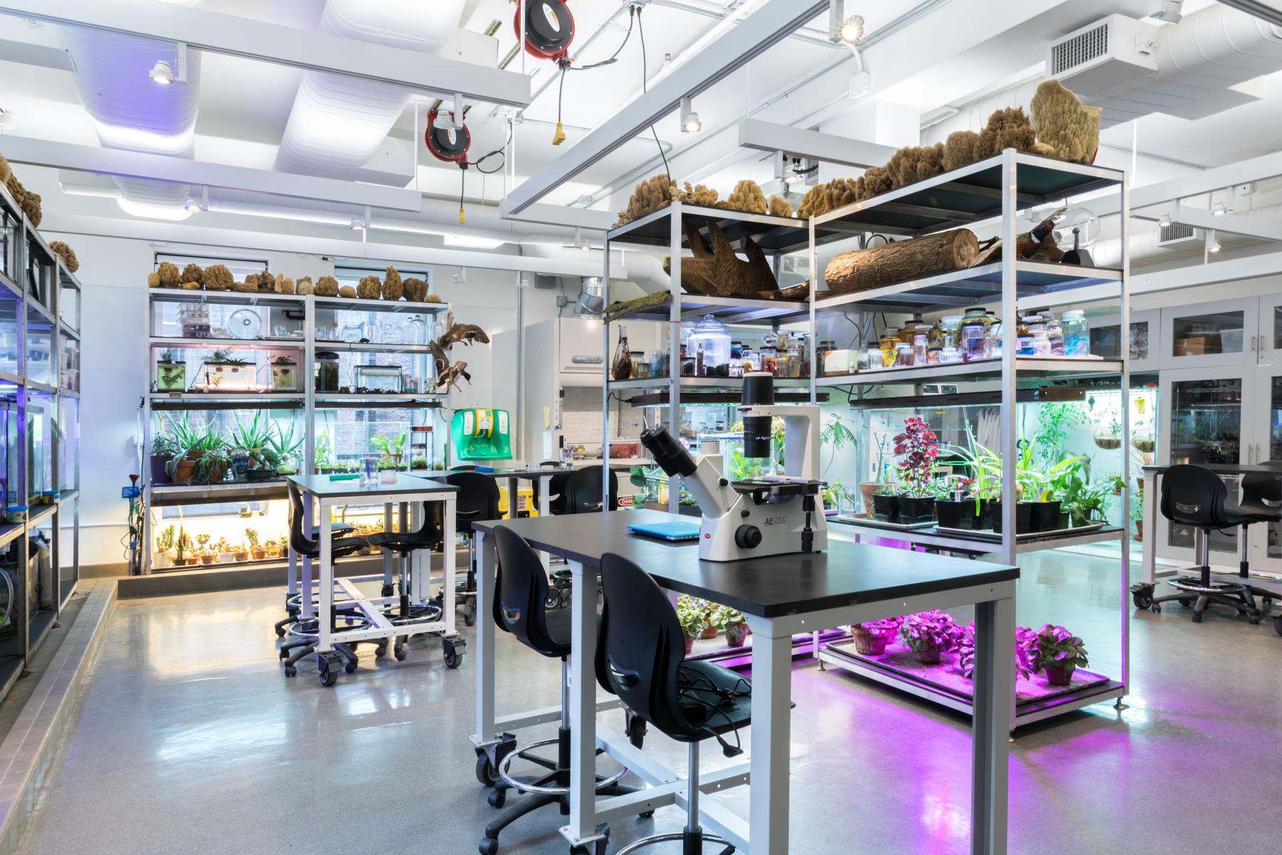 bio art lab sva