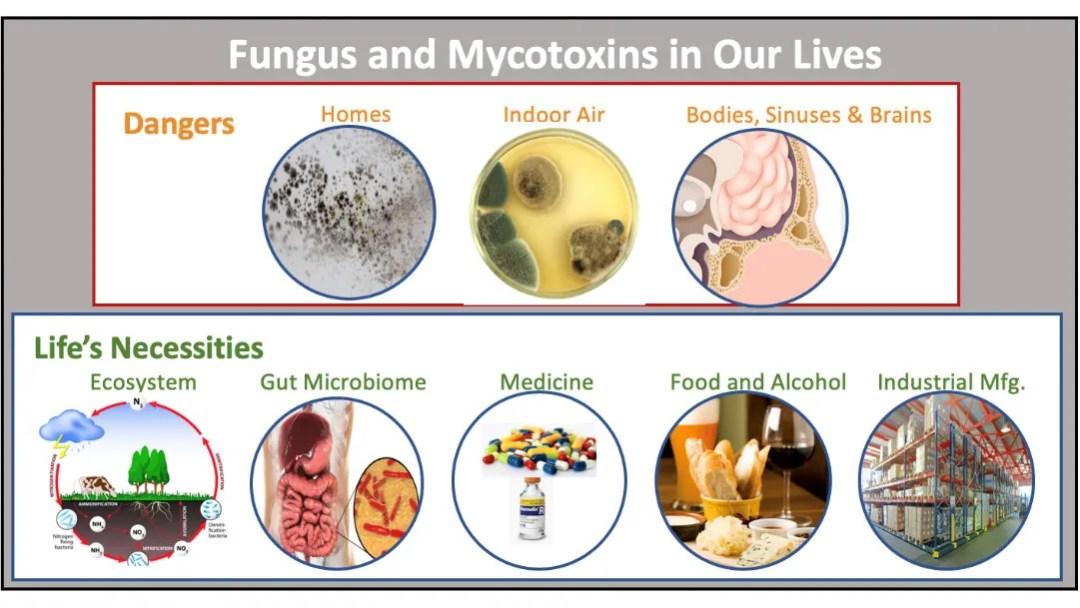 Understanding of Mold