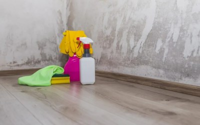 DIY Mold Inspection: Determining the Scope of Mold Problems on Drywall.