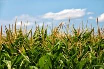 Biotecnología verde, transformando la agricultura