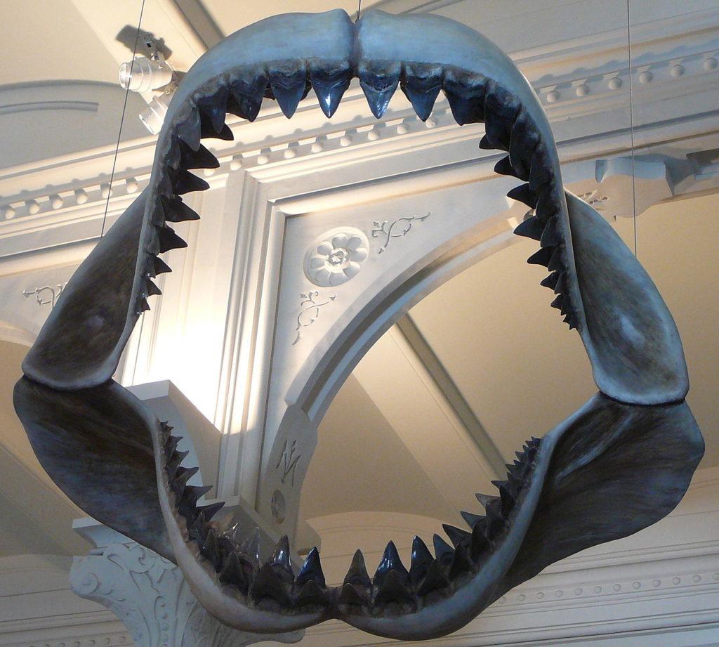 Мегалодон как гигантская вымершая акула