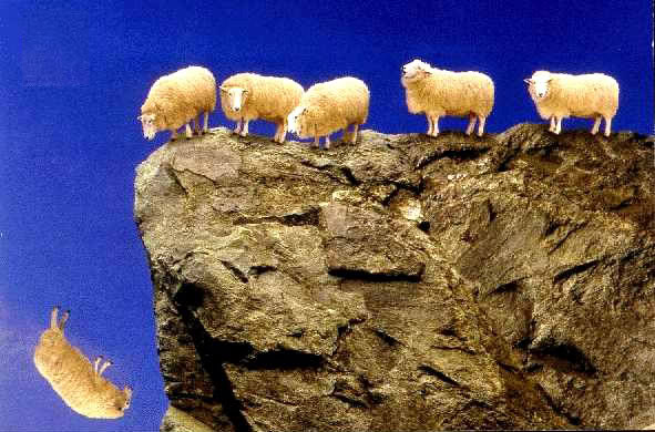sheep_off_cliff