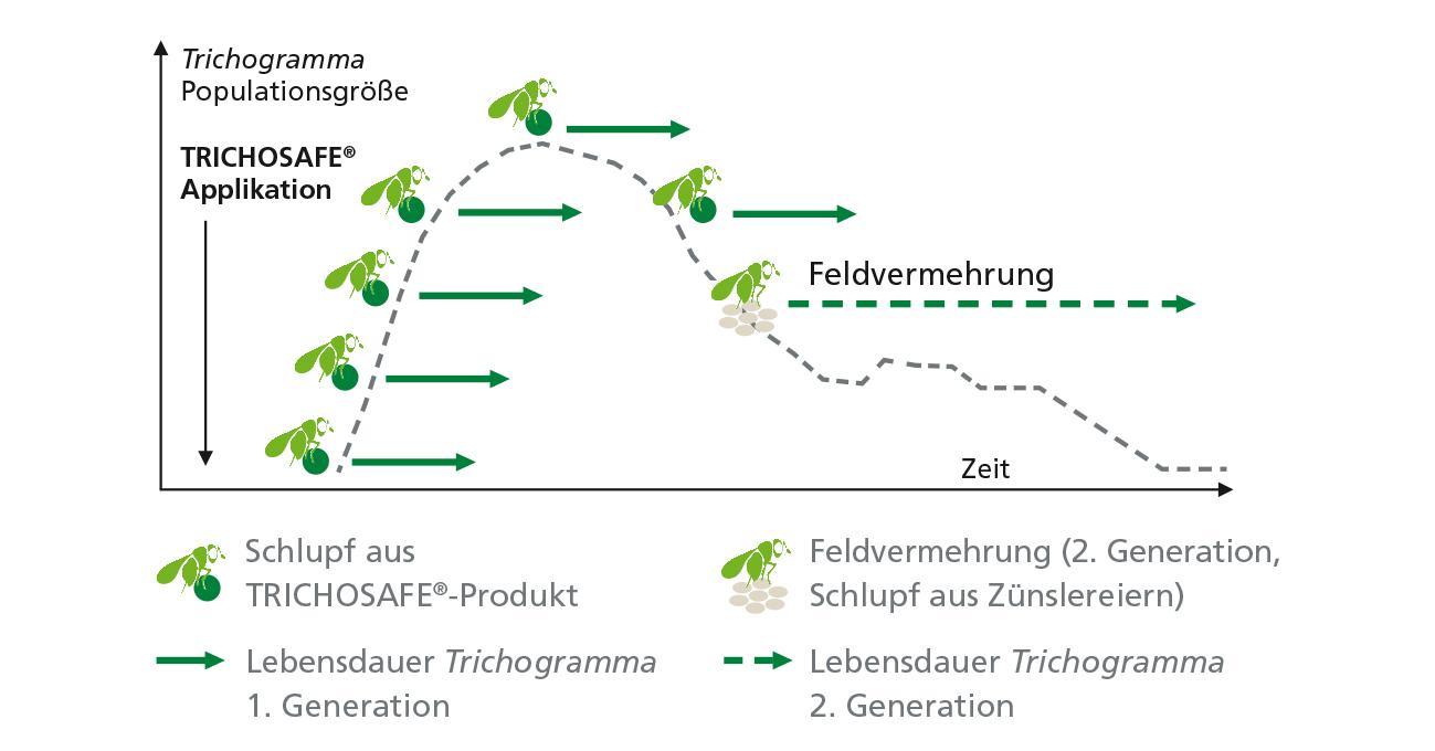 biocare wirkdauer