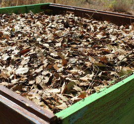 raised bed, complete with leaves as mulch