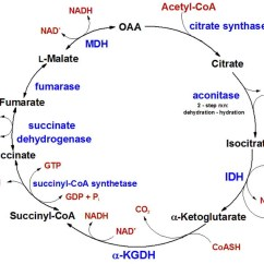 Calvin Benson Cycle Diagram 2000 Cherokee Radio Wiring Biochem4life | This Blog Serves To Document The Inner Workings Of Typical Biochemistry ...