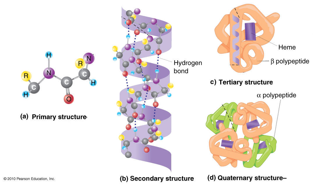 Tertiary Structure  Biochem and I